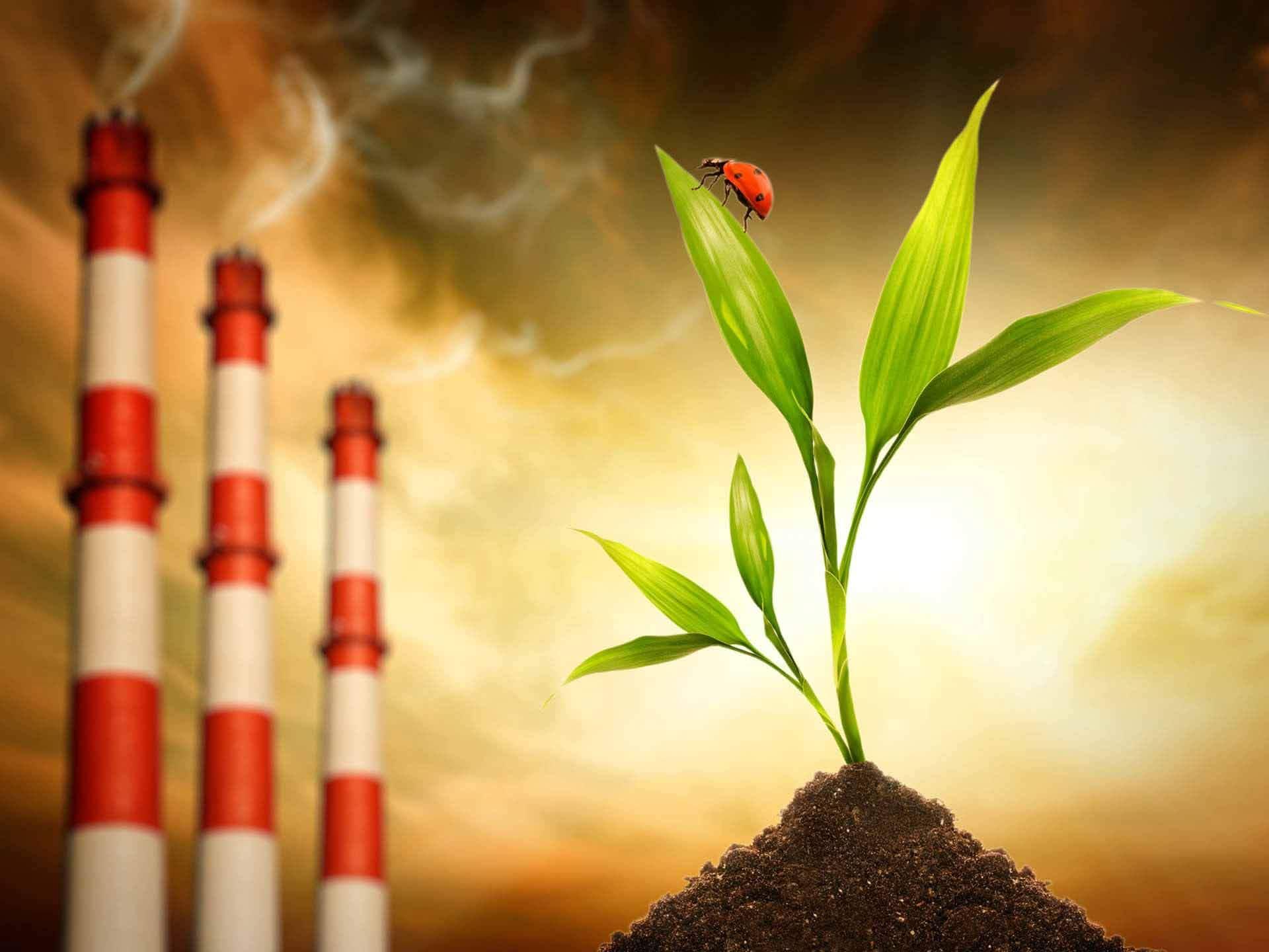 Уничтожение Michelin планирует минимизировать выбросы CO2 на своих объектах